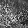 tylerfinck-bwgrass.jpg